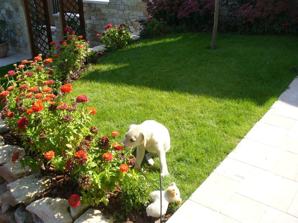 Harmónikus kert - Hihetetlen panoráma